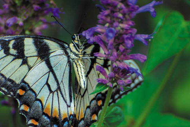 Backpage_PartingShot_Teaser_Butterfly_JAYPAUL_rp1020.jpg