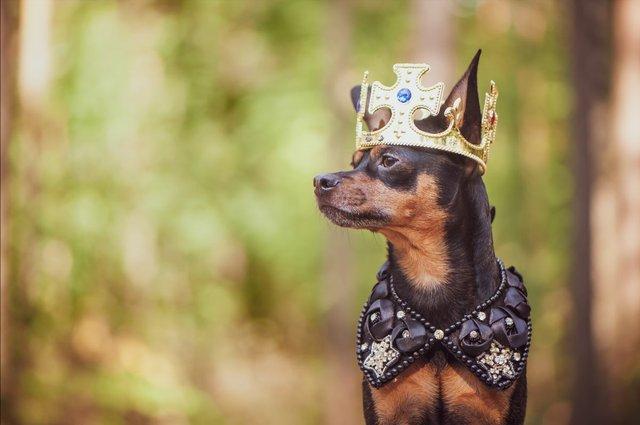 festive-dog.jpg