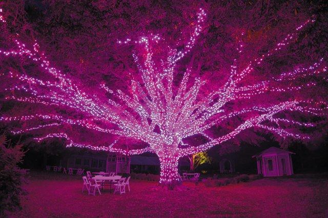 A&E_GardenFest_Darlington Oak_credit Nicole Plummer_rp1220.jpg