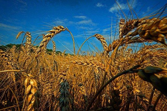 YearinReview_Wheat_JAYPAUL_rp1220.jpg