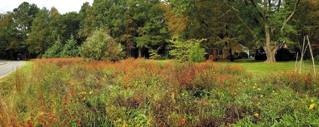 SB_Neighborhoods_HanoverCountyWildflowersNative_20201018_143915_PhotoMitziMasonLee_rp0221.jpg