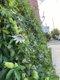 SB_Neighborhoods_Passionflower 2_PhotoJuliellenSarver_rp0221.jpg