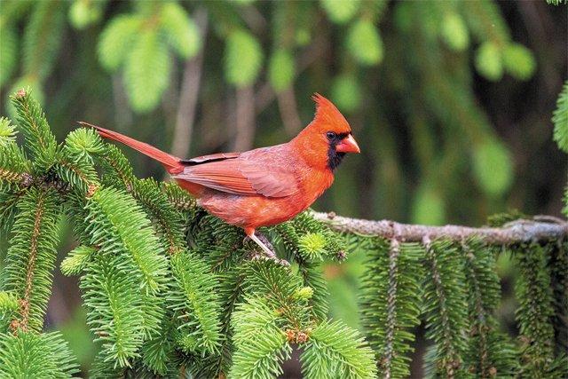 SB_Neighborhoods_Cardinal_PhotoDennisChurch_rp0221.jpg