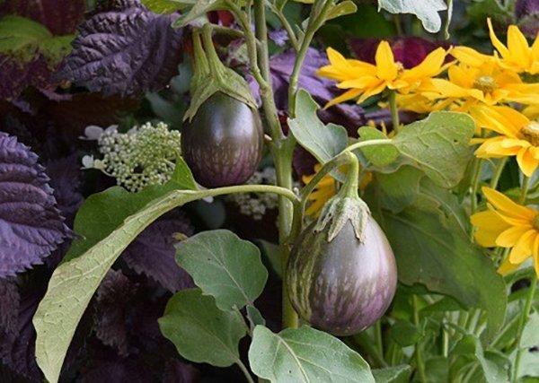 vegetables_teaser.jpg