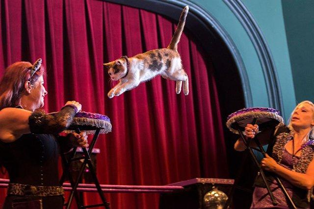 acro-cats_teaser.jpg