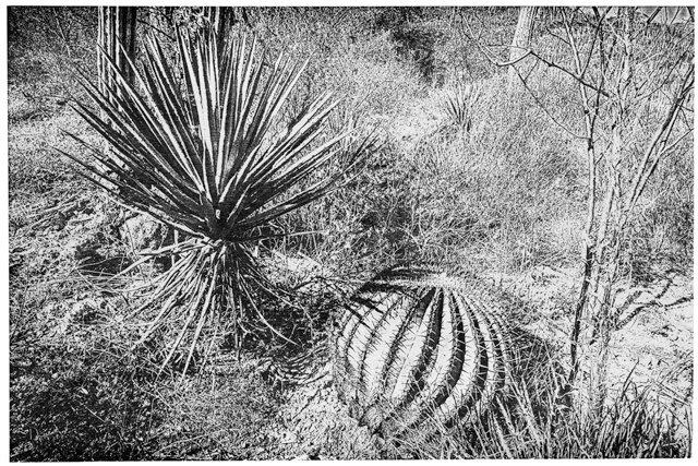 FEA_FallArts_Cactus #40 by Joseph Scheer_Courtesy Reynolds Gallery_rp0921.jpg