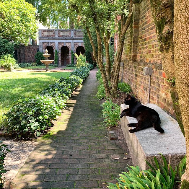 SunStory_10.10_lounging-cat-enchanted-garden_rachel-kestler.jpg