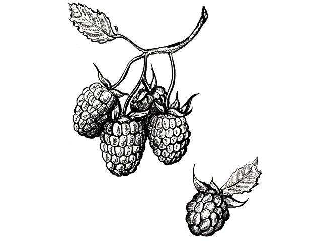 raspberry-mousse-recipe.jpg