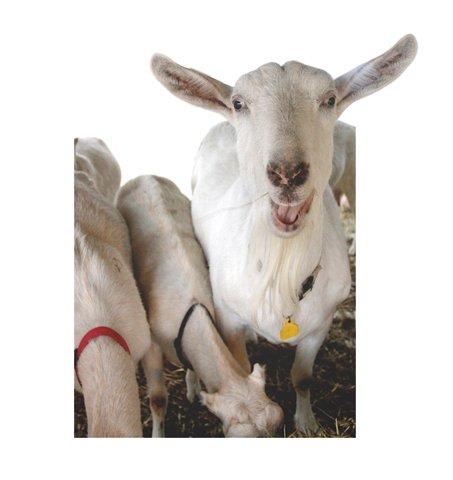 FoodChain_GoatCutOut_rp0215.jpg