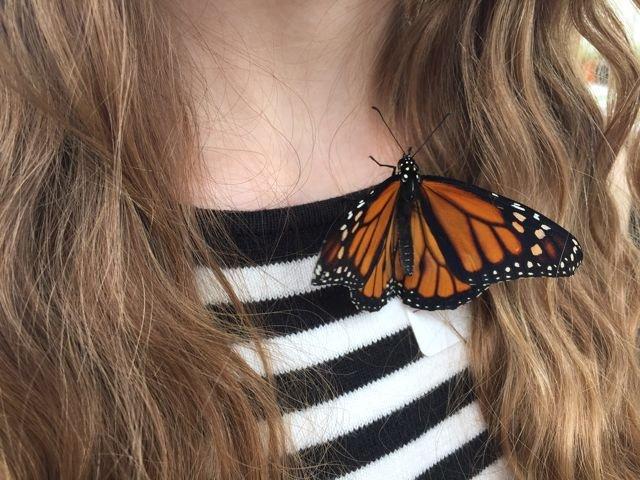 butterflieslive.jpg
