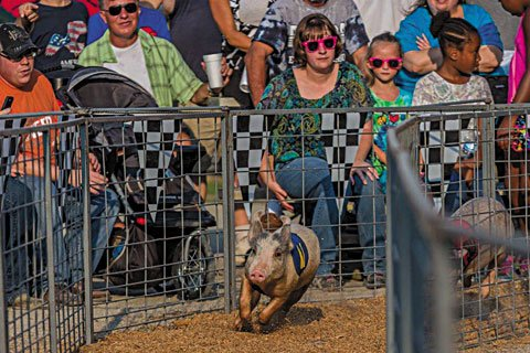 Datebook_ChesterfieldFair_rp0815.jpg