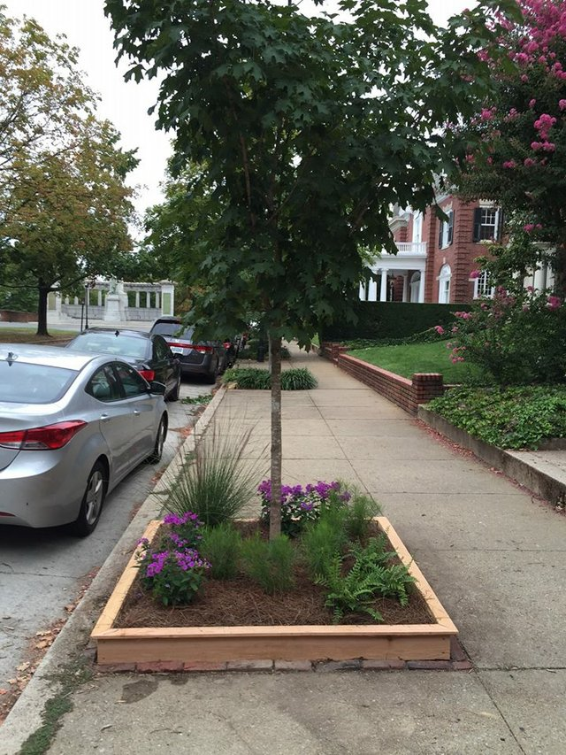 "Monument Avenue tree box ""after"""