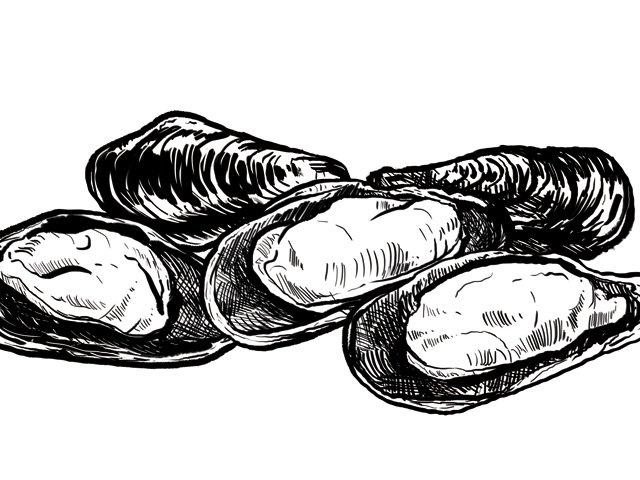 Dining_Ingredient_Mussels_Kristy_Heilenday_rp1015.jpg